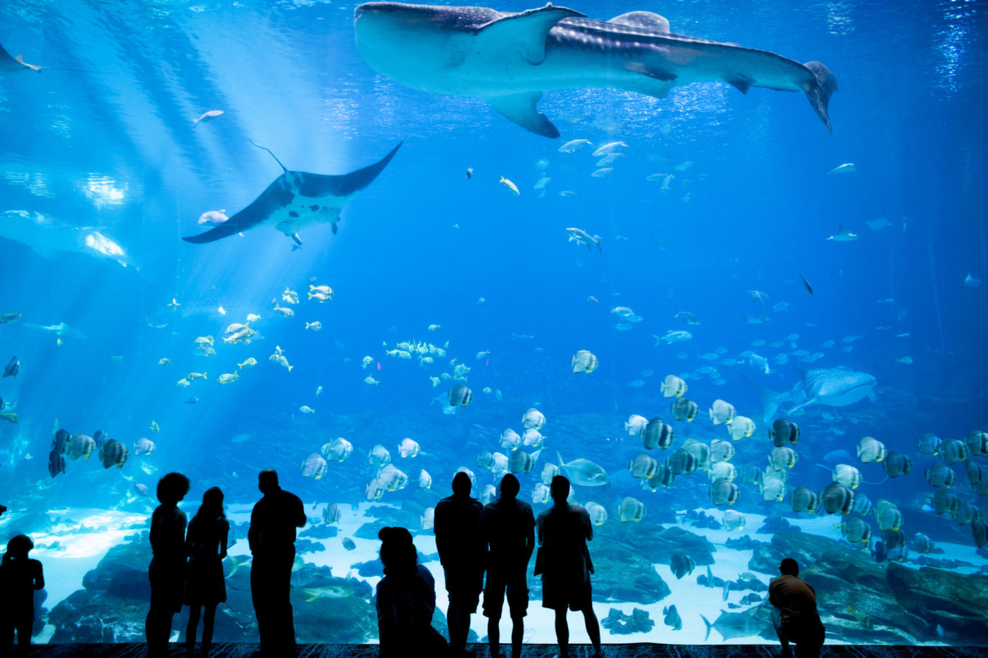 best aquariums in the us
