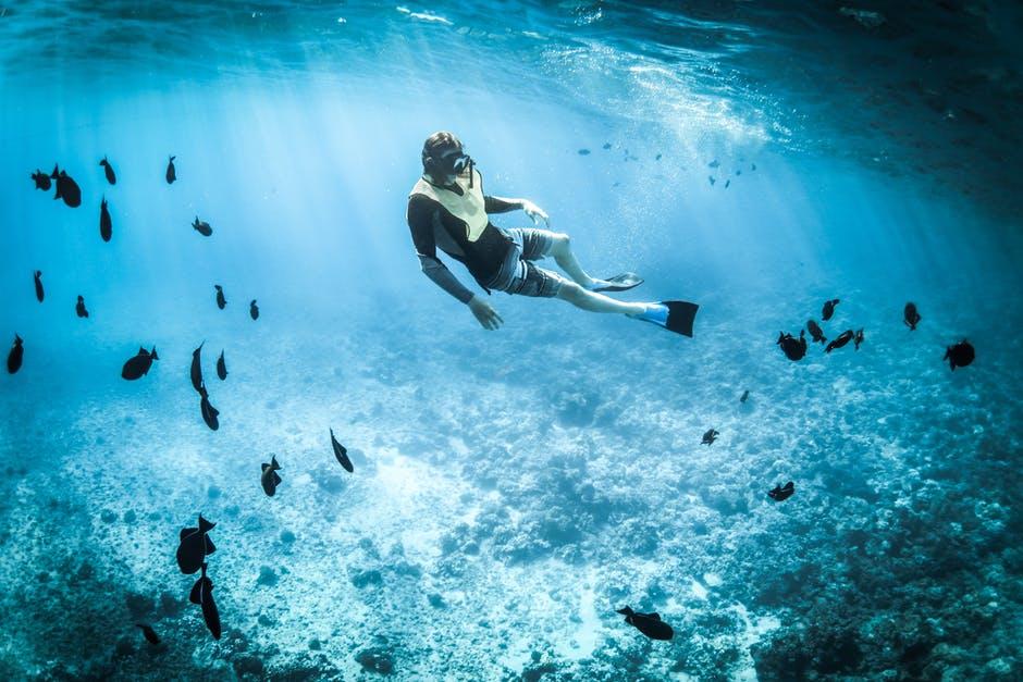 marine life image -- snorkeling